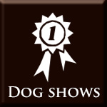 Gallery: Dog shows