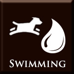 Gallery: Swimming